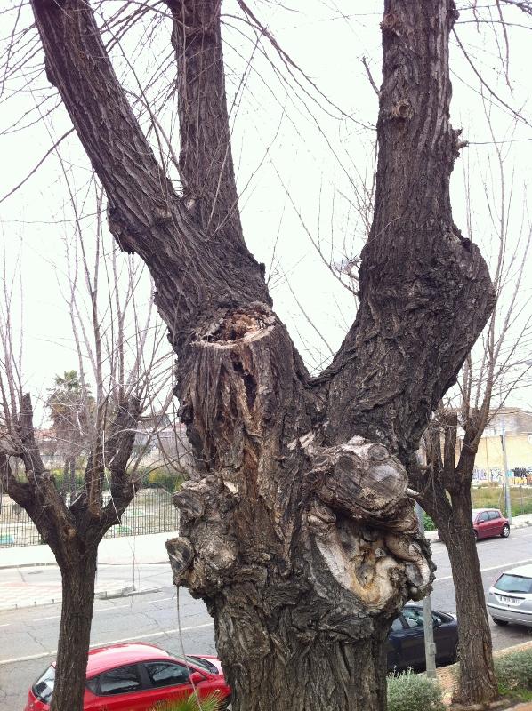 Árbol mutlado