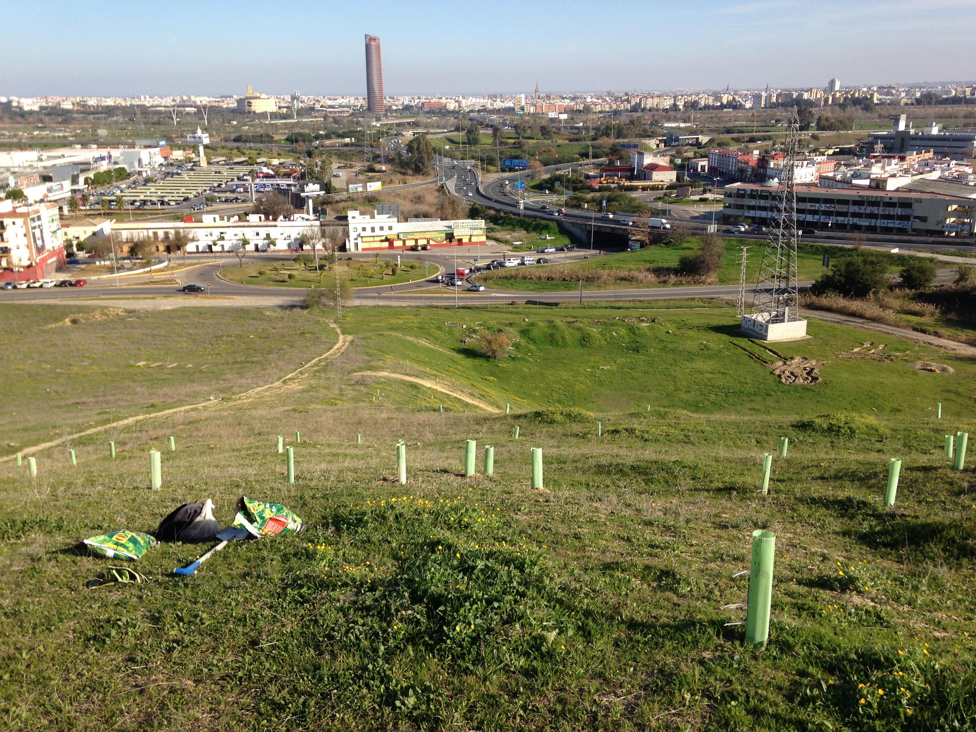 Proyecto Carambolo - Asociación Sevilla Más Verde