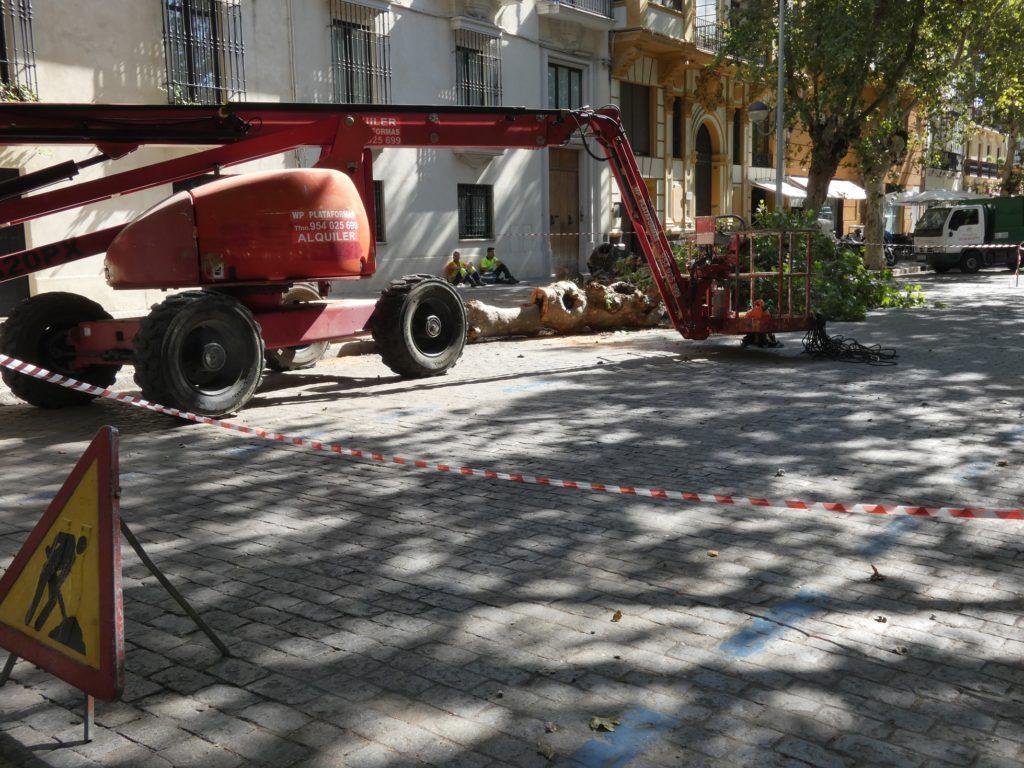 Talas en avenida de Cádiz